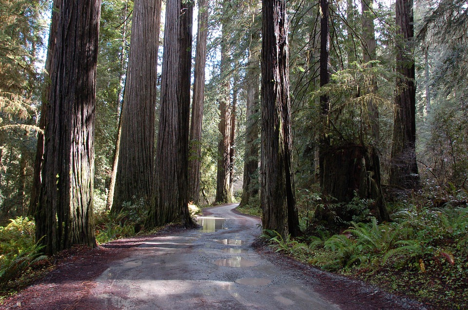 Looking for calm? Maybe you have to look for it on California´s Redwood