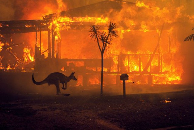 The frightening balance of Australia's fires: 1 billion dead animals and 10.3 million hectares burned